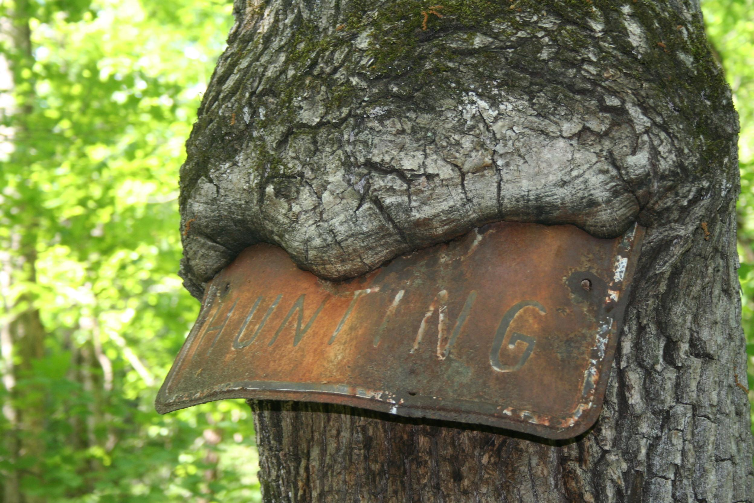 Tree eating sign