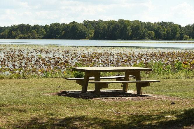 Lakepoint State Park Picnic