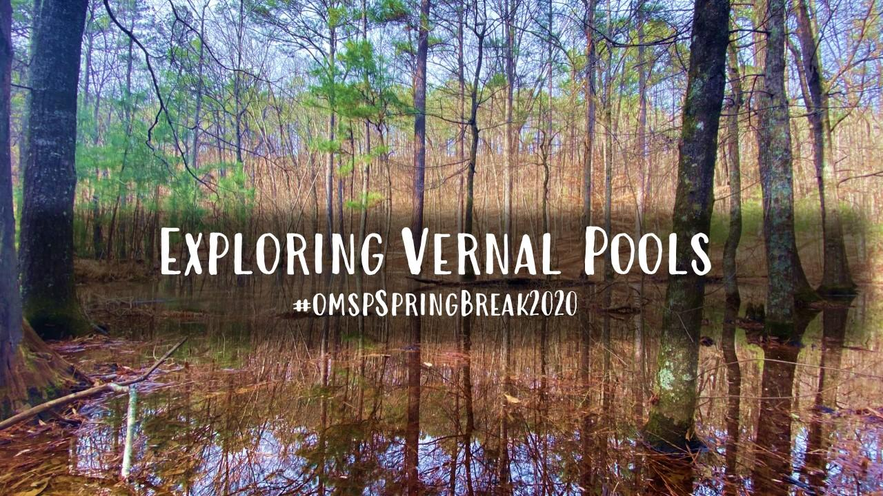 vernal  pool spring break