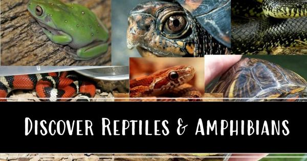 discover reptiles and amphibians