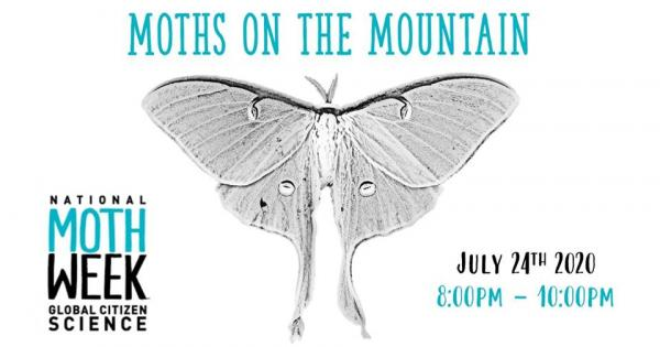 Moths on the mountain